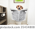dog on toilet seat reading newspaper 35434808