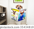 dog on toilet seat reading newspaper 35434810
