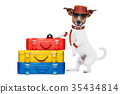 bellboy dog 35434814