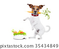 hungry dog with healthy bowl 35434849