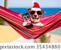 dog on hammock at christmas 35434860