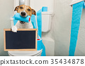 dog on toilet seat 35434878