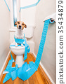 dog on toilet seat 35434879
