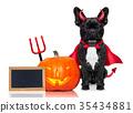 halloween dog  banner 35434881