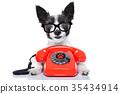 animal, call, dog 35434914