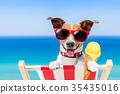 dog summer beach 35435016