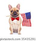 bulldog dog french 35435291