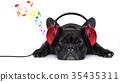 dog music 35435311