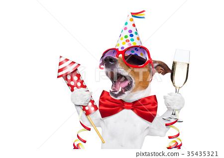 happy birthday dog 35435321