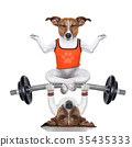 personal trainer dog and yoga dog 35435333