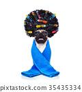 dog, groom, groomer 35435334
