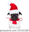 糖果 聖誕節 聖誕 35435380