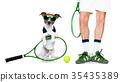 dog tennis ball player 35435389