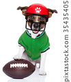 funny american football rugby dog 35435405