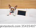 sick  ill dog 35435407