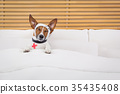 sick  ill dog 35435408