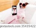 dog, selfie, spa 35435422