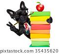 smart school dog 35435620