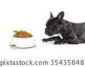 hungry dog with healthy bowl 35435648
