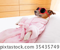 dog, relax, spa 35435749