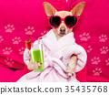 animal, bathrobe, dog 35435768