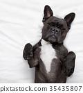 bed, dog, sleep 35435807