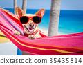 dog summer hammock 35435814