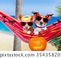 dogs on hammock on halloween 35435820