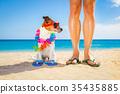 dog, holiday, owner 35435885