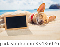relaxing dog on the beach 35436026