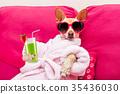 dog, spa, sunglasses 35436030