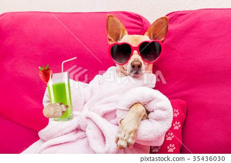 dog spa wellness 35436030