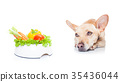 vegan dog 35436044