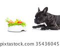 vegan dog 35436045