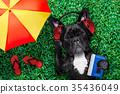dog listening music 35436049