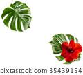 Amaryllis flower green monstera leaf Floral 35439154