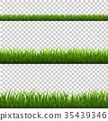 綠色 綠 青草 35439346