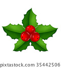 berry, christmas, holly 35442506
