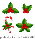 berry, christmas, holly 35442507
