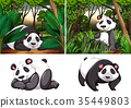 Panda in the deep forest 35449803
