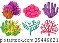 珊瑚 礁 花朵 35449821