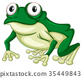 Green frog on white backgound 35449843
