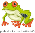 Green frog with happy smile 35449845