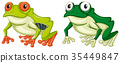 Two green frogs on white background 35449847
