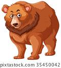bear, fur, brown 35450042