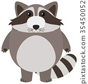 Cute raccoon on white background 35450052