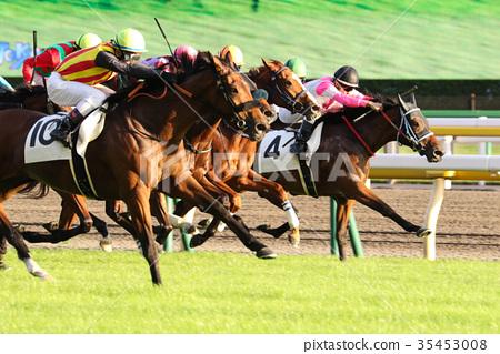 Horse race 35453008