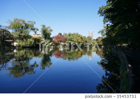 Ishigami公園公園池塘 35453731