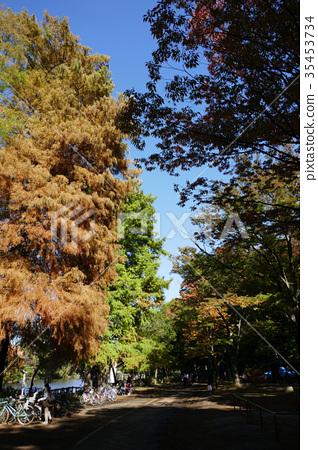 Ishigami公園在秋天 35453734