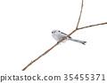 銀喉長尾山雀 野生鳥類 野鳥 35455371